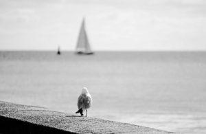 bird-1513046_640