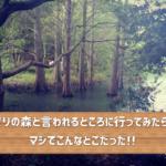 今年のGWは篠栗の名所(Part 1)九大の森へ(シシ神の森)!