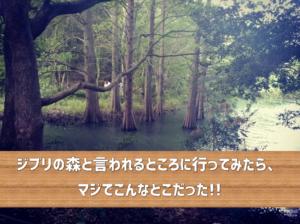 九大の森1