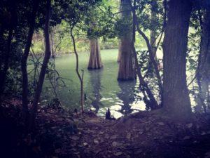 九大の森2