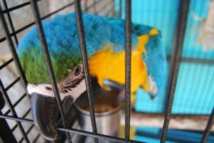 parrot-276927_1280